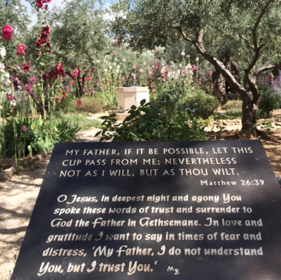 Garden of Gethsemane prayer (photo take by Kaitlyn Bouchillon)