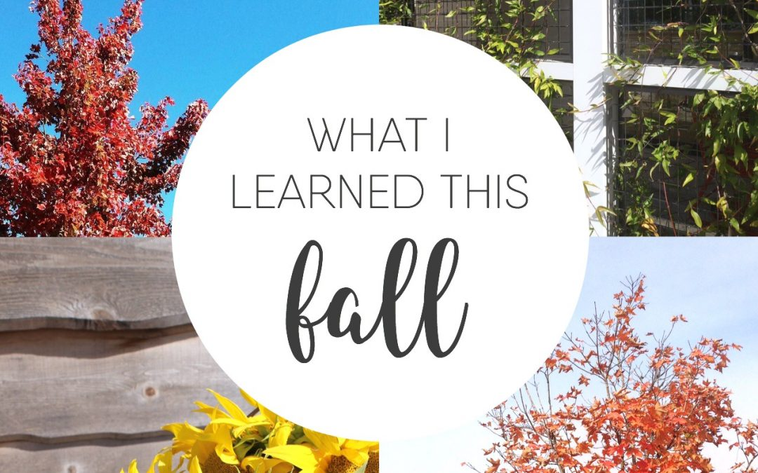 What I Learned This Fall