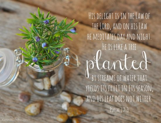 His delight is in the law of the Lord, and on his law he meditates day and night. He is like a tree planted by streams of water that yields its fruit in its season, and its leaf does not wither. (Psalm 1:2-3)