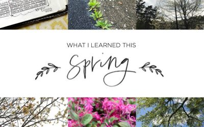 Seven Things I Learned This Spring